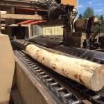 Log from Ring Debarker