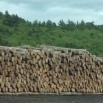 2-Log-Yard