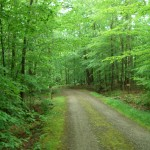 Hardwood Forest, early summer