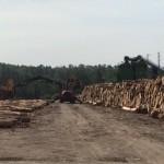 Scaling in Log Yard